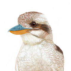Kookaburra, Australian wildlife, art print, home or nursery decor