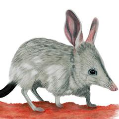 Bilby, Australian wildlife, home or nursery decor, art print