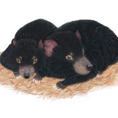 Tasmanian devils, wildlife print, art print, home or nursery decor