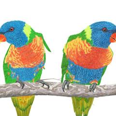 Rainbow lorikeets, wildlife print, art print, nursery or home decor
