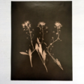 Original Silver Gelatin Print Set of 6, Black and White Prints