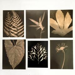 Silver Gelatin Prints, Original Photograms, Caffenol Prints