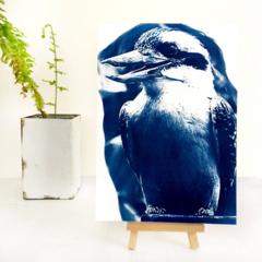 Kookaburra Art Print, Original Cyanotype 6x8 inches
