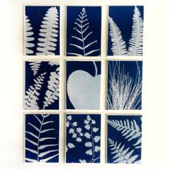 ACEO Cyanotype Print Set of 9, Fern Prints, Botanical Art