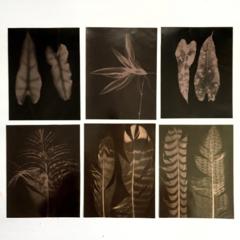 Original Photograms, Silver Gelatin Prints, Black and White