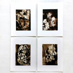 Silver Gelatin Prints, Original Photograms, Handmade Photos, Set of 4 Chemigrams