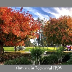 AUTUMN IN TOCUMWAL 50x100cm CANVAS