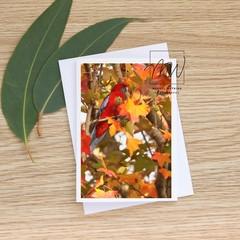 Where's the Crimson Rosella? - Photographic Card #67
