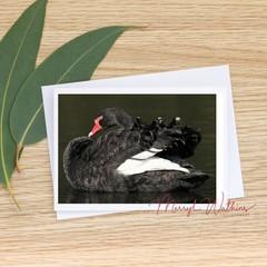 Black Swan Elegance - Photographic Card #65