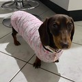 Dog Coats Size SM-EDIUM Jumper Coat Double Fleece