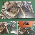 TOCUMWAL KOALA 12 piece jigsaw