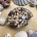 Amethyst, Aventurine, Selenite and Shell Energy Pod