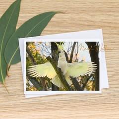 KIng Cockatoo -  Photographic Card #69
