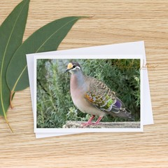 Common Bronzewing Pigeon - Photographic Card #70
