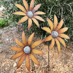 Metal Flannel Flower