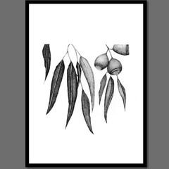 Australian Gum Tree Botanical II of II