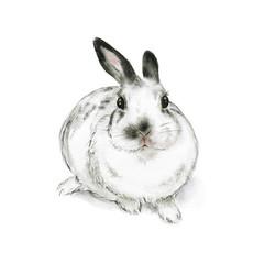 Art Print 'A Content Rabbit' A4