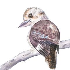 Art Print 'The Kookaburra'
