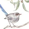 Art Print 'Splendid Fairy Wren Female'