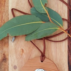 Celery Top Pine pendant with dolphin