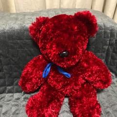 The Bunker Bear. fluffy red