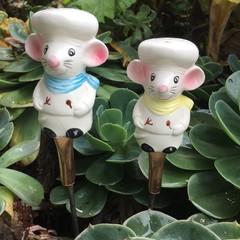Pair of White Mice