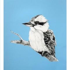 Australian Kookaburra Blue Print