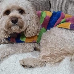READY MADE Dog Coats ALL SIZES BRIGHTS DOUBLE FLEECE