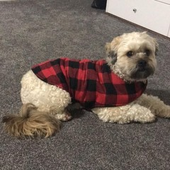 READY MADE Dog Coats ALL SIZES RED BLACK CHECK FLANNELETTE & FLEECE