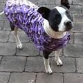READY MADE Dog Coats PURPLE DOGGIES DOUBLE FLEECE Various Sizes