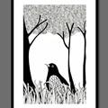 Australian Blackbird Illustration